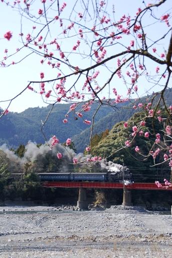 大井川1-3.JPG