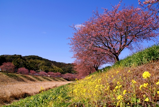 青野川1.JPG